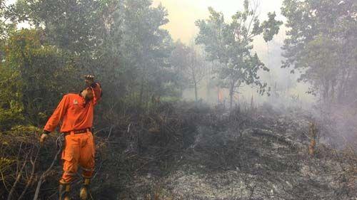 Riau Segera Tetapkan Status Siaga Darurat dan Aktifkan Posko Penanggulangan Bencana Kebakaran Hutan