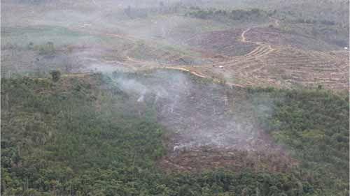 Kapolda Riau Minta PKS Tidak Terima Buah Sawit dari Perkebunan di Areal Taman Nasional Tesso Nilo