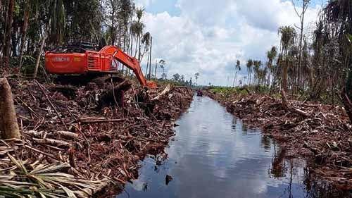 Pemerintah Inggris Danai Sejumlah Konsorsium di Riau untuk Merestorasi Lahan Gambut