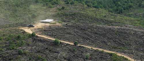 WWF Sebut Penanganan TNTN Pelalawan Harus dengan Mekanisme Hukum