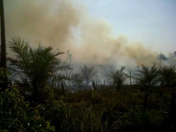 Lima Bos Perusahaan di Riau Sandang Status Tersangka Pembakaran Lahan