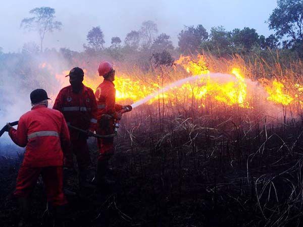 Curah Hujan Indonesia Masih Tinggi, Indragiri Hulu Dilanda Kebakaran Hutan dan Lahan