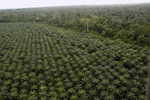 Luar Biasa, PT Ronatama Diduga Hanya Andalkan SKT Desa untuk Kelola Kebun di Kawasan Hutan Indragiri Hulu