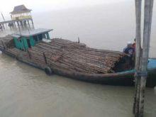 penyelundupan-ribuan-batang-kayu-bakau-ke-malaysia-berhasil-digagalkan-polisi