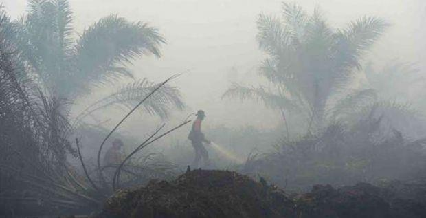 Satu Lagi Direksi Perusahaan Jadi Tersangka Kasus Kebakaran Lahan di Riau