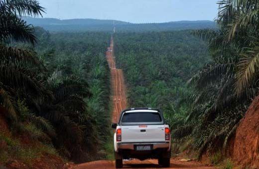 Sulap 453 Hektar Hutan Rohil Jadi Kebun Sawit, Anggota DPRD Riau Siswadja Muljadi Dijebloskan ke Penjara