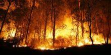 untuk-kesekian-kalinya-gubernur-riau-didesak-buka-data-perusahaan-pembakar-lahan