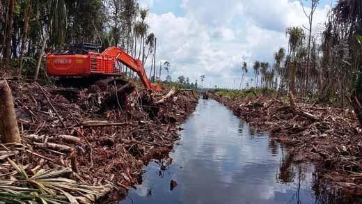"""Upps! Latah, Gubernur Riau """"Ikut-ikutan"""" Bentuk Tim Restorasi Gambut"""