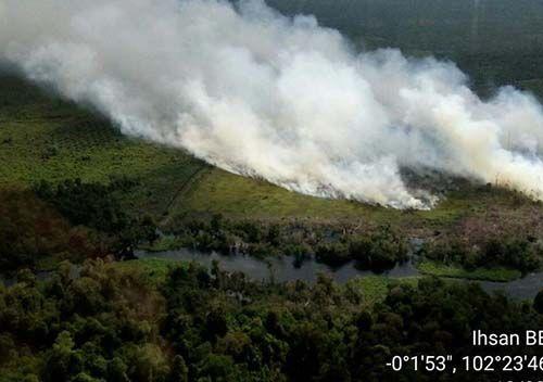 Kebakaran Gambut di Desa Pangkalanterap Pelalawan Baru Padam setelah Lima Hari