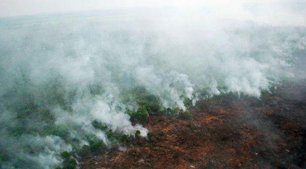 Awal 2017, Sudah Hampir 300 Hektar Lahan Riau Terbakar