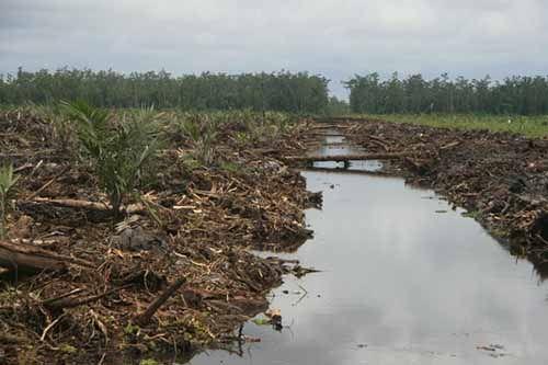 Akademisi di Riau Berharap Regulasi Lahan Gambut Direvisi
