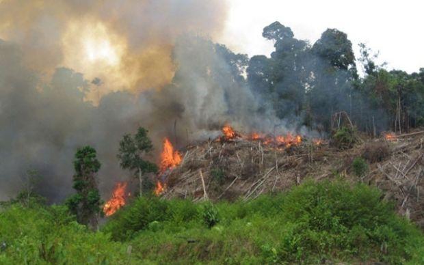 Musim Kemarau Telah Tiba, Warga Lubukdalam Siak Diingatkan agar Tak Bakar Hutan dan Lahan