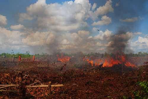 Kemarau Panjang Tahun 2017 Ancam Kebakaran Lahan di Riau