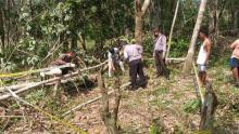 warga-pelalawan-tewas-tertimpa-pohon-karet-yang-ditebangnya
