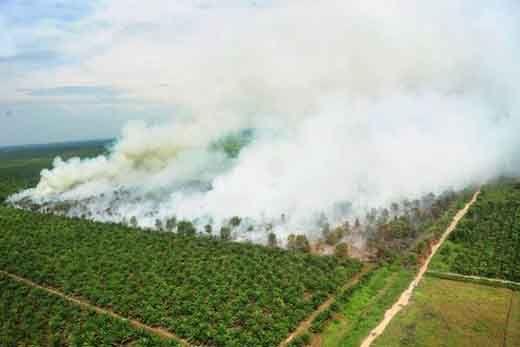 Kontra Banding Kasus Kebakaran Hutan di Kepulauan Meranti Riau, Kementerian LHK Siap Hadapi PT National Sago Prima (Sampoerna Agro)