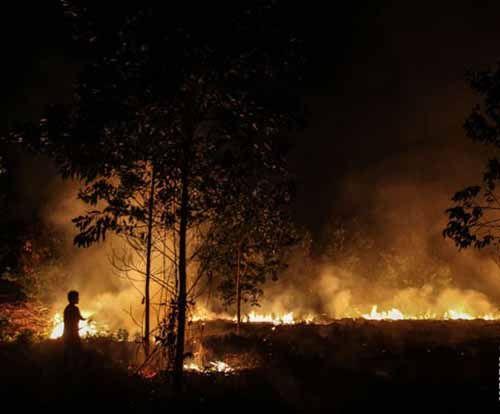 64 Hektar Lahan Riau Terbakar Sepanjang Januari-Februari 2017