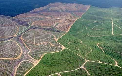 Seakan Bantah Data LSM, Guru Besar IPB Bilang Lahan Perkebunan Sawit di Kabupaten Kampar, Kuantan Singingi, Pelalawan, dan Siak Bukan dari Kawasan Hutan