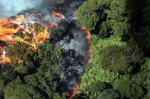 Walhi Ingin Penegakan Hukum terhadap Pembakar Hutan dan Lahan Dipertegas