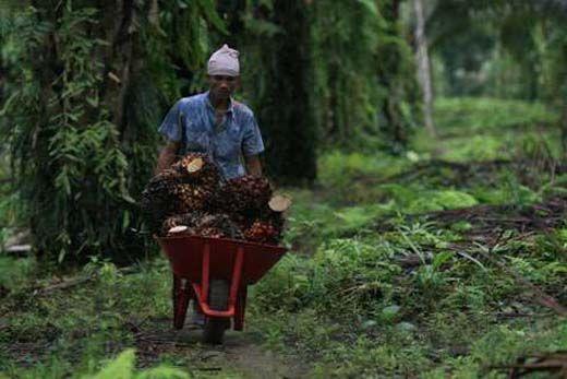 Dua Perusahaan Kucurkan Rp1,2 Triliun Bangun Industri dari Limbah Pelepah Pohon Sawit di Riau