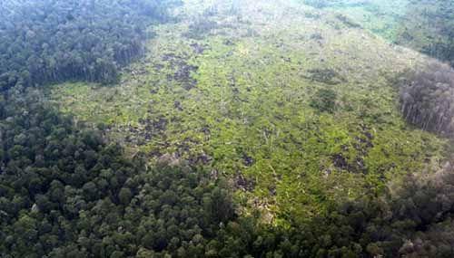 "Setelah Bekuk ""Gendut"", Polisi Bengkalis Tangkap Cukong Perambah Hutan Cagar Biosfer di Kampung Gotek Desa Bukitkerikil, Usianya Masih 28 Tahun"