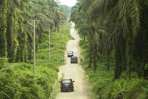 Primadona yang Tetap Mempesona, Hampir 70 Persen Warga Riau Masih Bergantung dari Komoditi Perkebunan