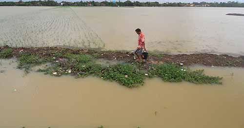 Rendam 7 Kecamatan dan 2.472,9 Hektar Lahan Perkebunan, Banjir di Indragiri Hulu Belum Tunjukkan Tanda-tanda Bakal Surut