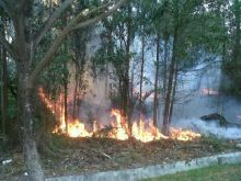 diduga-disengaja-hutan-sekitar-bandara-ssk-ii-pekanbaru-terbakar
