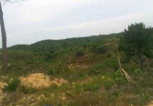 Diduga Babat Hutan Lindung Bukitbetabuh, Satu Unit Alat Berat Diamankan Warga Kuansing