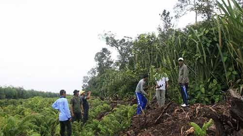 Program Perhutanan Sosial Berjalan Lamban di Riau! Baru 13 Ribu dari 1,2 Juta Hekar Lahan yang Miliki Hak Pengelolaan Hutan Desa