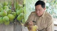 bupati-inhil-ajak-warga-konsumsi-kelapa-muda-cegah-corona