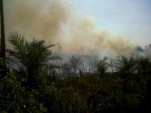 kebun-sawit-pt-teso-indah-di-inhu-terbakar-humasnya-bilang-asal-api-berasal-dari-lahan-masyarakat
