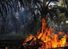 lahan-milik-koperasi-tandan-harapan-di-pelalawan-terbakar-lagi-lokasinya-tak-jauh-dari-kantor-camat