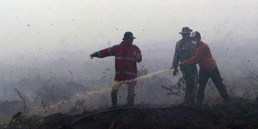 Apa Kabar Kasus Kebakaran Hutan di Riau yang Libatkan 2 Perusahaan di Siak dan Rohul?