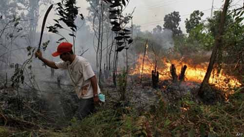 Puluhan Hektar Lahan Pemkab Bengkalis di Dekat STIE Syariah Terbakar
