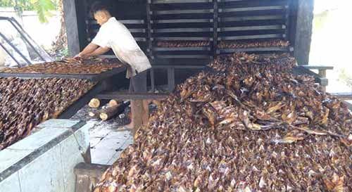 Mengintip Proses Pembuatan Ikan Salai Patin, Makanan Kebanggaan Warga Riau