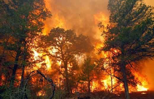 Kabareskrim Polri Ungkap akan Ada Praperadilan SP3 15 Perusahaan Terduga Pembakar Hutan di Riau