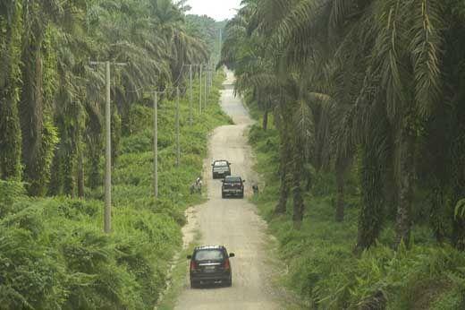 16 Perusahaan Perkebunan Sawit di Pelalawan Dapat Sanksi Administratif