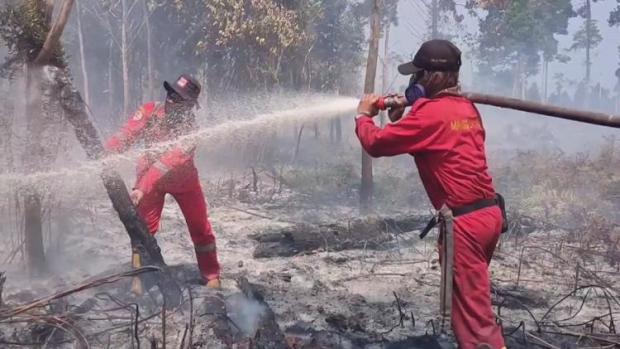 Petugas Damkar Siak Kewalahan Padamkan Kebakaran Lahan Gambut di Kampung Bunsur Sungaiapit
