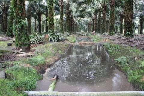 Limbah Sawit di Kabupaten Siak Akan Menjadi Sumber Baru Bioenergi