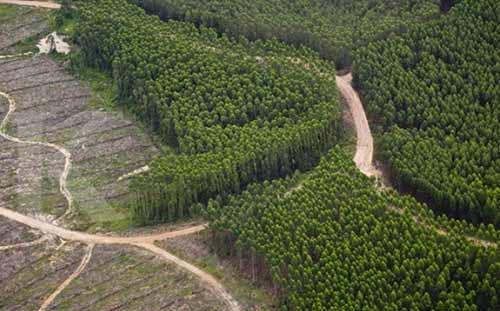 Gubernur Riau Andi Rachman Tak Ingin Ada PHK karena Aturan Gambut