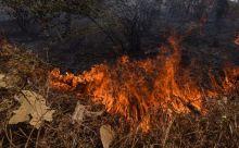 100-hektar-hutan-lindung-suaka-margasatwa-kerumutan-riau-terbakar