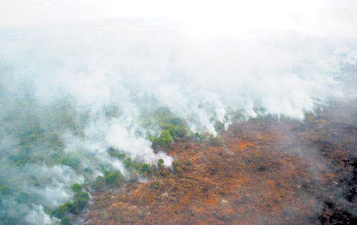 Lahan Gambut Seluas 20 Hektar Milik Pemerintah Desa Desa Pulaumuda Kabupaten Pelalawan Terbakar