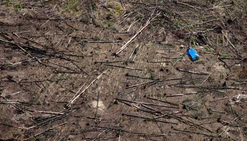 Kementerian LHK Terus Dalami Temuan Ekskavator di Taman Nasional Tesso Nilo