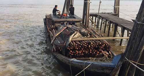 Kapal Pembawa Kayu Diduga Hasil Jarahan Hutan Bakau yang Akan Diselundupkan ke Malaysia Diamankan di Perairan Kepulauan Meranti