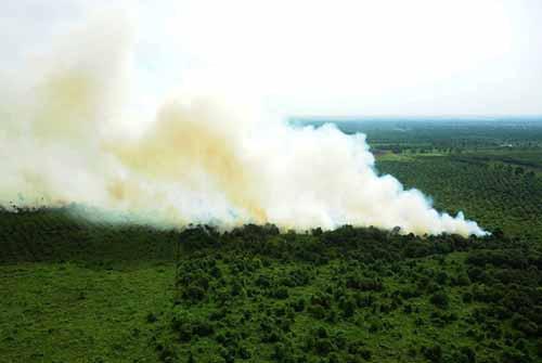 Kebakaran Hutan di Sumatera Meluas hingga 7 Provinsi, Riau Sumbang 16 Titik Panas