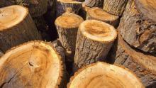 kerja-sama-antara-dlhk-riau-dengan-pt-bumi-laksmana-jaya-soal-pemanfaatan-hasil-kayu-hutan-dinilai