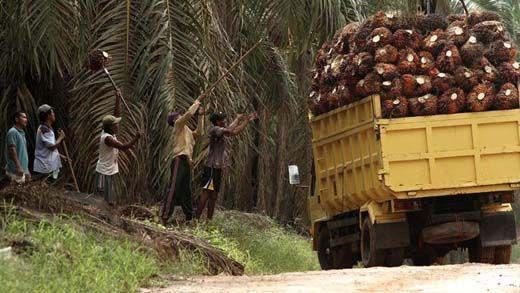 """Bisnis Minyak Sawit """"Fiktif"""" yang Jerat Anggota DPR Indra Simatupang Bawa-bawa Nama PTPN V, Wilmar dan PT Sinar Jaya, Begini Kronologinya"""