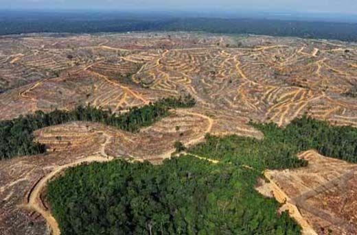 Pansus DPRD Provinsi Temukan 700 Perusahaan di Riau Rambah Hutan secara Ilegal