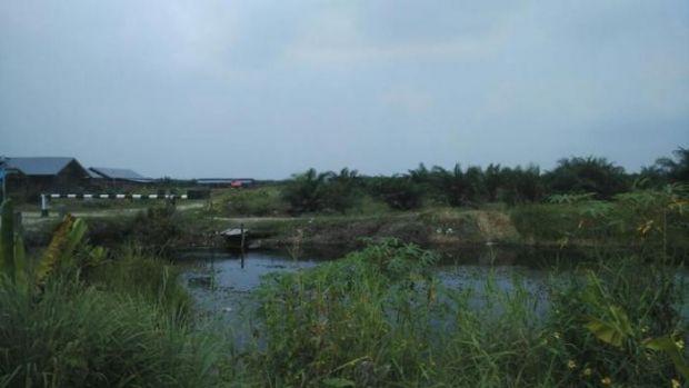 Kejaksaan Negeri Pelalawan Masih Hitung Kerugian Negara Pascatetapkan Dua Tersangka Cetak Sawah Tahun 2012