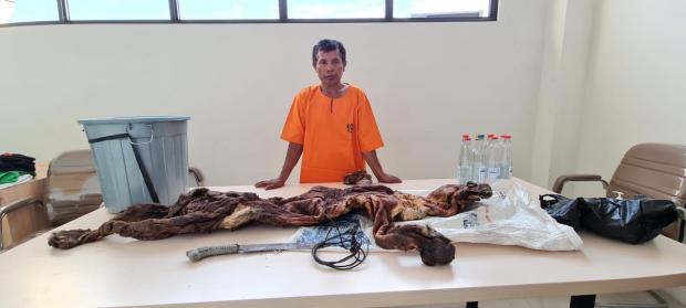 Dicegat Petugas, Pembawa Kulit Harimau Berhasil Lolos dengan Cara Terjun dari Atas Jembatan Aro Wilayah Muaralembu Kuansing, Seorang Rekannya Diamankan